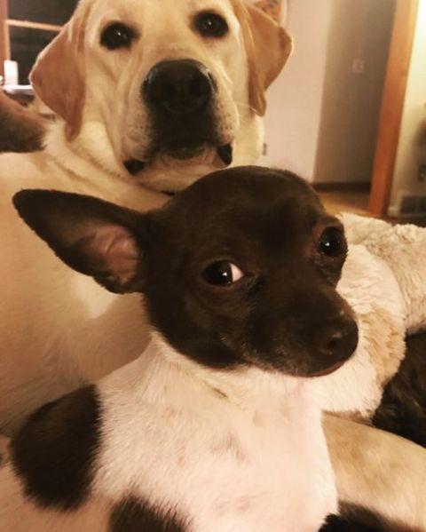 Jason Carr's pet dogs